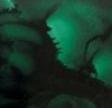 BG51 Dark Green